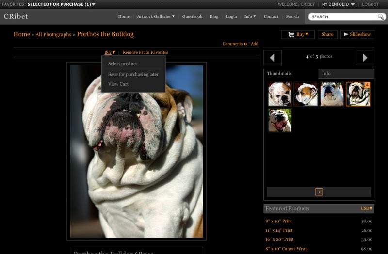 Porthos the Bulldog Buy A